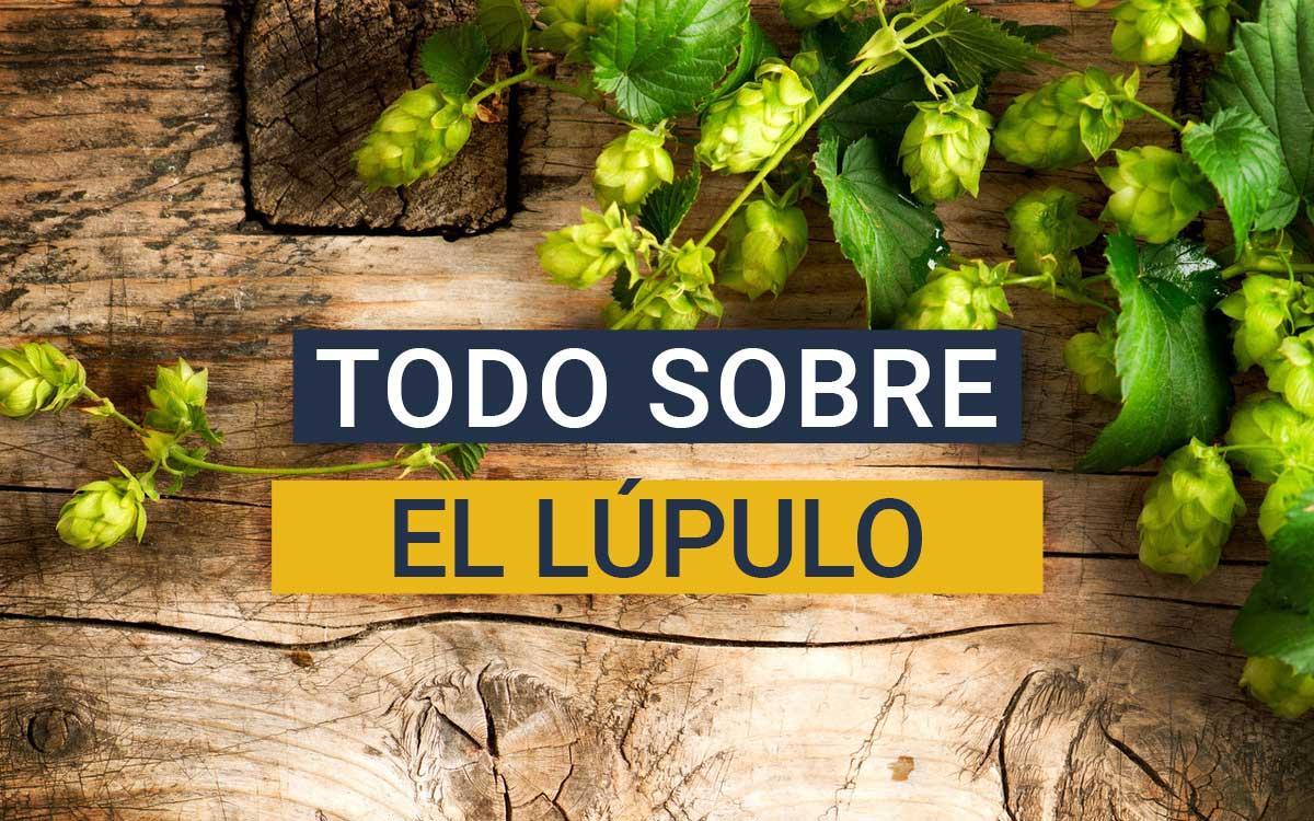 https://www.beersandtrips.com/wp-content/uploads/2021/03/que_es_el_lupulo.jpg